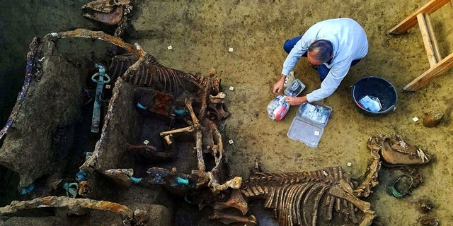 "The remains found near the city of Vinkovci in Croatia; These images show the incredible discovery of a Roman chariot complete with the fossilized remains of horses that archaeologists have found as part of a burial ritual for ""extremely wealthy families"". (Credit: CEN)"