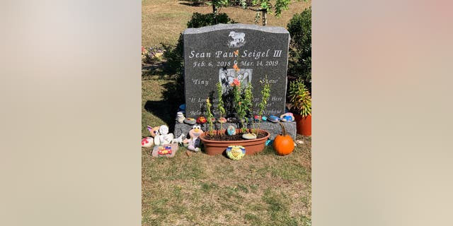 Westlake Legal Group sean-5-e1570126911640 Rhode Island mom who lost son, 1, to cancer asking for Halloween-themed rocks for boy's grave Madeline Farber fox-news/health/healthy-living/childrens-health fox-news/health/cancer/blood-cancer fox-news/health/cancer fox news fnc/health fnc e0549891-9772-533d-8434-9bbce1dcdbac article /FOX NEWS/LIFESTYLE/OCCASIONS/Holiday