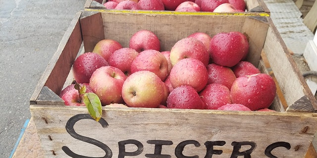 The 180 bushels of apples stripped off 5 acres' worth of trees,are worth an estimated $14,400 and require an entire year to be grown.
