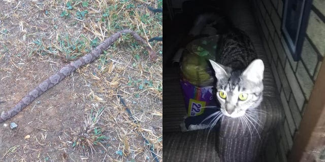 Teresa Seals says Shelley, a cat from a shelter, saved her father, an 81-year-old stroke victim, from a copperhead snake last week.