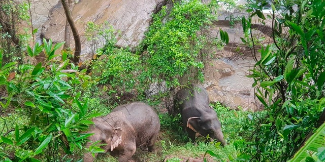 Two elephants were discovered stuck on the edge of the Haew Narok Waterfall. (Department of National Parks via AP)