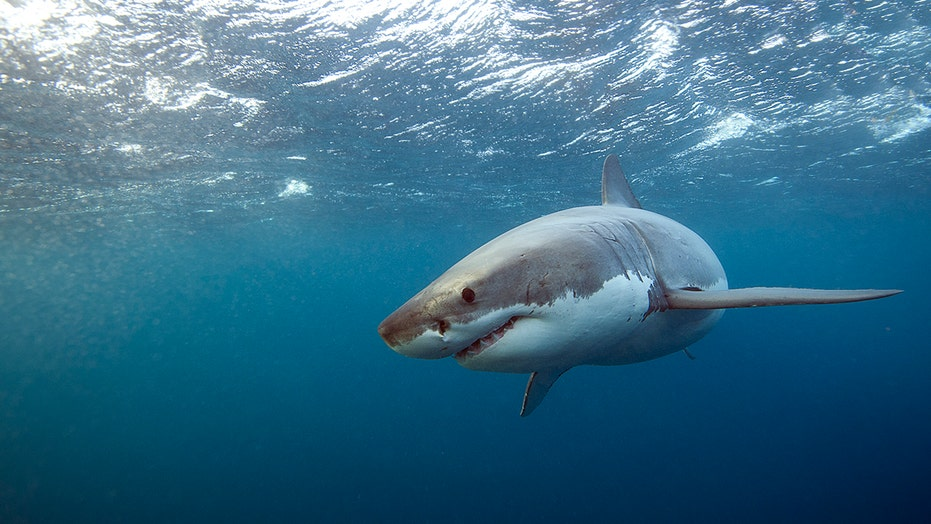 400M-year-old 'armored' fish may change the history of sharks as we know it