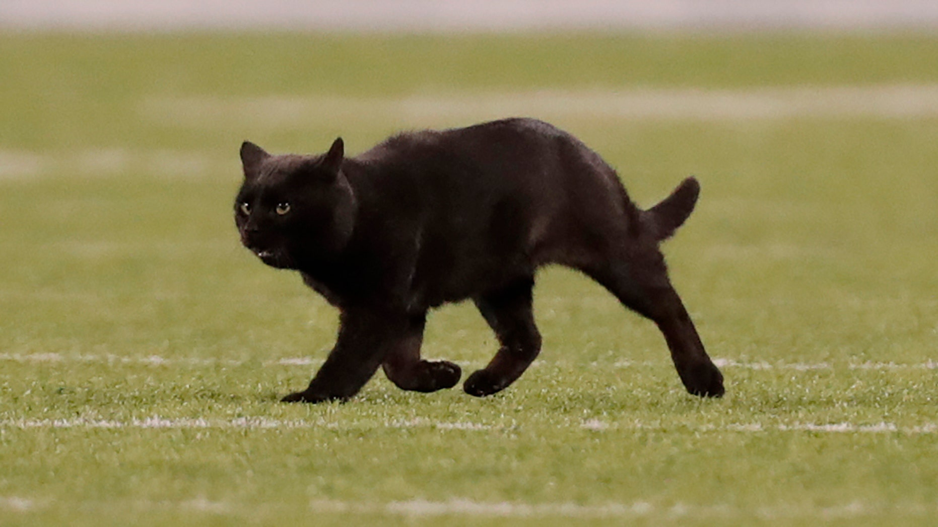 Feral Cats Living at MetLife Stadium