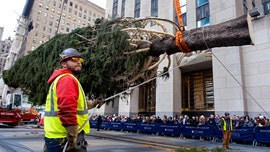 Rockefeller Center Christmas tree arrives in New York City: 12 things you never knew about the famous fir