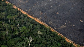 Amazon deforestation in Brazil hits 11-year high, data shows