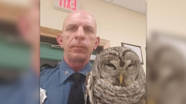 Maine owl gets lift in state trooper's patrol car after rescue