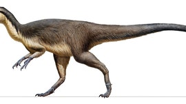 Feathered dinosaur fossils discovered in Australia