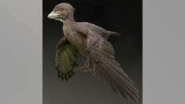 120M-year-old bird that lived during the age of dinosaurs discovered in Japan