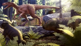 World's oldest carnivorous dinosaur found