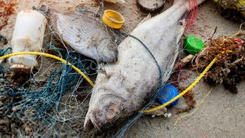 Fishing crews to blame for much of the plastic in the world's oceans, Greenpeace says