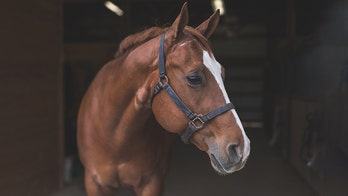 Mystery horse attacks that have killed several animals leave South Carolina investigators stumped