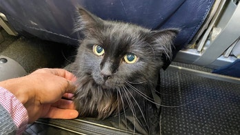 Oregon man reunited with missing cat found 1,200 miles away, 5 years after it vanished