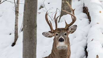 Deer with three antlers caught on camera in Michigan
