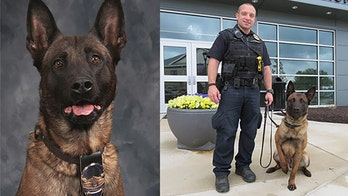 Indiana police dog shot dead while chasing suspect in woods