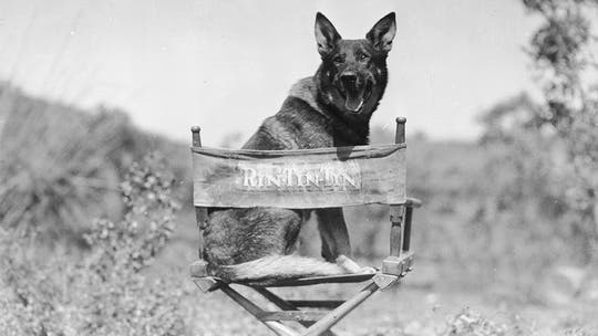 Warner Bros to launch film on Rin Tin Tin, the hound who saved the studio from bankruptcy, as a military hero