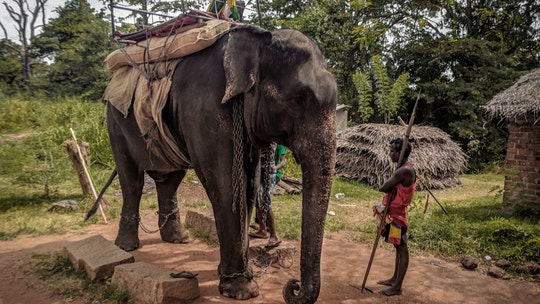Elephant dies of 'exhaustion' from carrying tourists in Sri Lanka