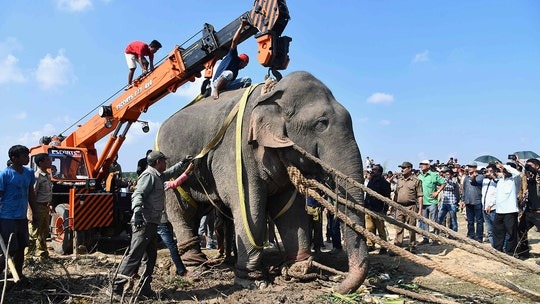 Elephant, named Usama bin Laden, dies in captivity after killing 5 villagers in India, officials say