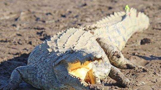 Zimbabwean girl, 11, says she wrestled crocodile, gouged out eyes to save 9-year-old friend: report