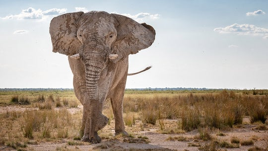 Elephant kills Austrian tourist during camping trip in Namibia, police investigating