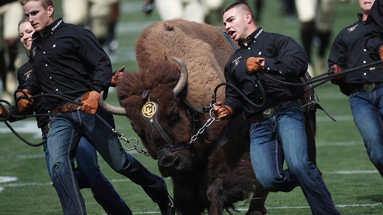 University of Colorado's 1,200-pound buffalo mascot forced to retire for being too fast