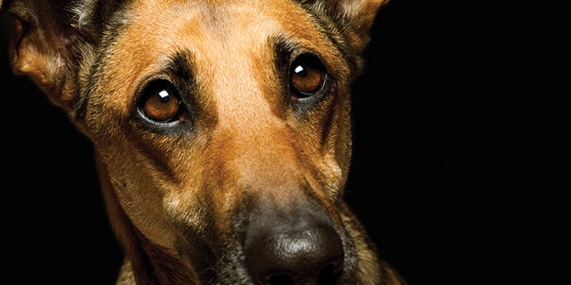 The PACT Act, passed unanimously by the Senate, would prohibit extreme acts of cruelty when they occur in interstate commerce or on federal property and cracks down on sexual abuse of animals.