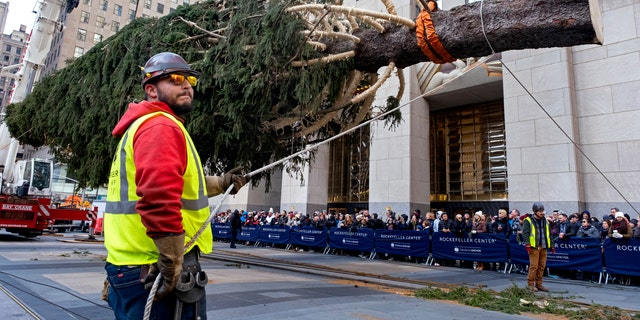 The 2019 Rockefeller Center Christmas tree, a 77-foot tall, 12-ton Norway Spruce, was prepared for a platform at Rockefeller Center. (AP Photo/Craig Ruttle)