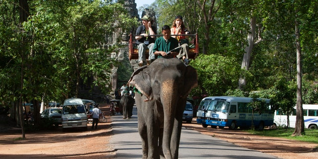 Officials in Cambodia have ordered that elephants that serve as tourist attractions at the country's famed Angkor temple complex be moved to a new home in a suitable jungle area.