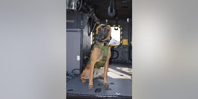 """The system is designed to protect dogs from """"high-decibel noise"""" in training, transport and operations."""