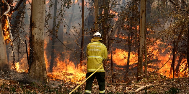 A National Parks and Wildlife crew member fights flames at Half Chain road at Koorainghat, near Taree in New South Wales state Tuesday, Nov. 12, 2019. Hundreds of schools remained closed across Australia's most populous state on Tuesday, Nov. 12, and residents were urged to evacuate woodlands for the relative safety of city centers as authorities braced for extreme fire danger. (Darren Pateman/AAP Images via AP)