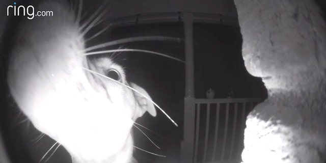 Incredible dog rings doorbell after accidentally getting locked out