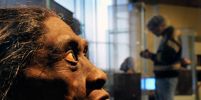 A sculpted model of Homo Floresiensis at The Smithsonian Museum of Natural History in Washington DC.