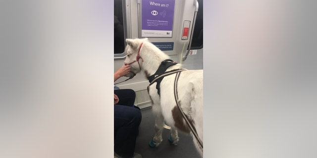 A passenger's miniature horse service animal took a ride on San Francisco's BART on Tuesday. (Courtesy of RodRLou)
