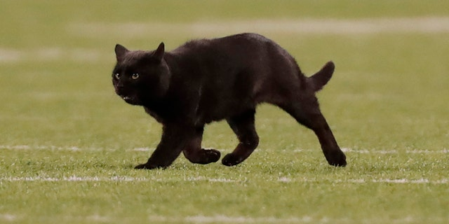 A cat runs on the field during the second quarter of an NFL football game between the New York Giants and the Dallas Cowboys, Monday, Nov. 4, 2019, in East Rutherford, N.J.