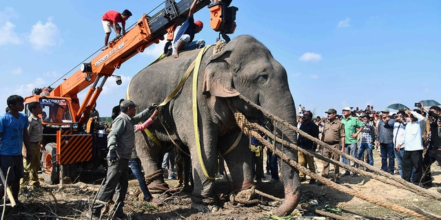 An elephant nicknamed Usama bin Laden and captured less than a week ago after it killed five villagers in India in October died on Sunday, officials said.