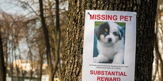 On the tree hangs the announcement of the missing puppy. (Photo: iStock)