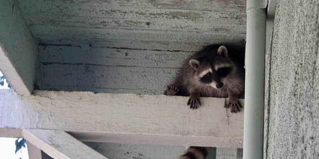 Finding a live animal is much scarier than finding a dead animal 鈥� but both are equally unwelcome, says a home inspector.
