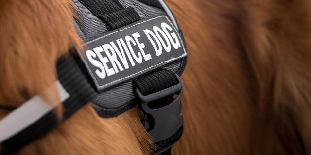 Westlake Legal Group Service-Dog-iStock Veteran with service dog denied entry to Pittsburgh restaurant Gerren Keith Gaynor fox-news/us/us-regions/northeast/pennsylvania fox-news/us/military/veterans fox-news/lifestyle/pets fox-news/lifestyle fox news fnc/food-drink fnc article 6d2006e8-2354-53a7-80a6-f6d0658b2493