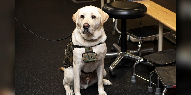 Sully, the service dog for the late President George H.W. Bush, posed during a Boston Red Sox visit to Walter Reed National Military Medical Center in May. (Photo by Billie Weiss/Boston Red Sox/Getty Images)
