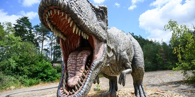 A model of a Tyrannosaurus-rex predatory dinosaur - file photo.