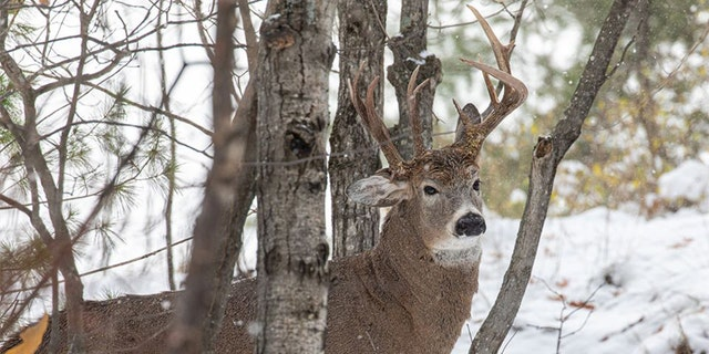 The deer was photographed by former Democratic state lawmaker Steve Lindberg.