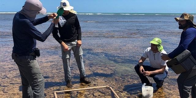 Researchers from the Bahia Federal University collect material contaminated by an oil spill in Camacari, Bahia state, Brazil, on Oct. 23.