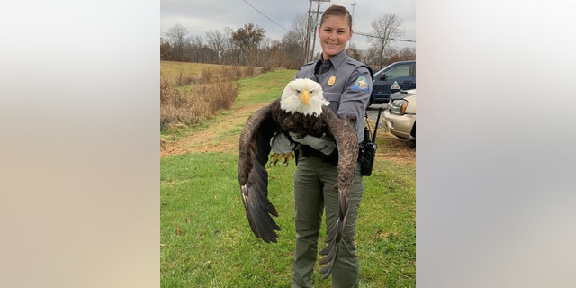 Westlake Legal Group missouri-dept-conservation-bald-eagle-rescue-cropped Bald eagle rescued in Missouri after being shot in wing; shooter could face $100G fine Stephen Sorace fox-news/us/us-regions/midwest/missouri fox-news/us/crime fox-news/science/wild-nature/birds fox-news/science/wild-nature fox news fnc/us fnc article 938a57ce-ab69-5fa3-ad5d-22b5ec71b30c