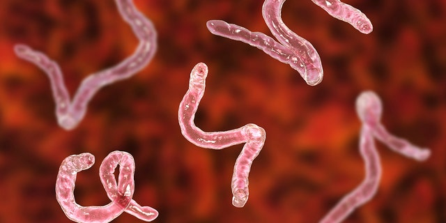 Doctors from the Hospital for Tropical Diseases eventually told James Michael a parasitic worm had crawled up his penis and laid eggs in his body. (Photo: iStock)