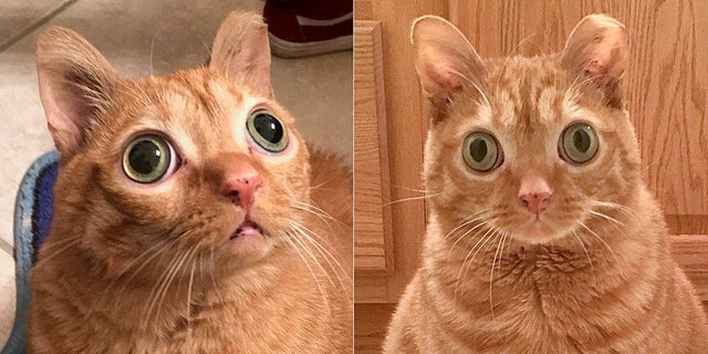 Potato the Cat has racked up an eye-popping 34,252 Instagram followers (and counting) in less than two years.