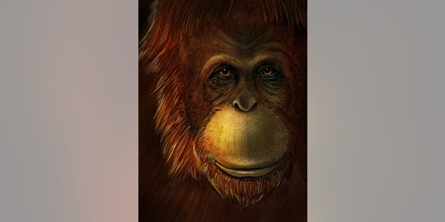 Artistic representation of Gigantopithecus blacki. Credit: Ikumi Kayama (Studio Kayama LLC)