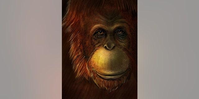 Artistic representation of Gigantopithecus blacki. (Credit: Ikumi Kayama, Studio Kayama LLC)