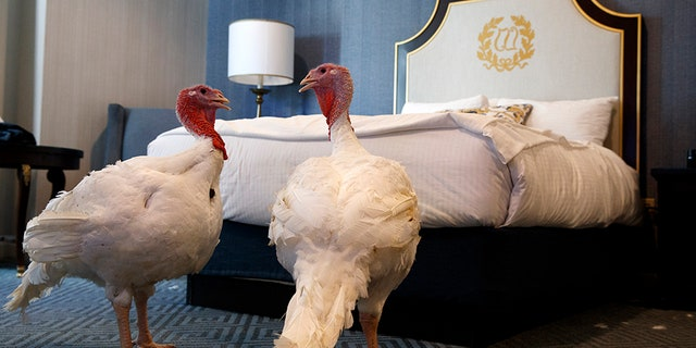 President Donald Trump jokes about impeachment probe at annual Thanksgiving turkey pardon