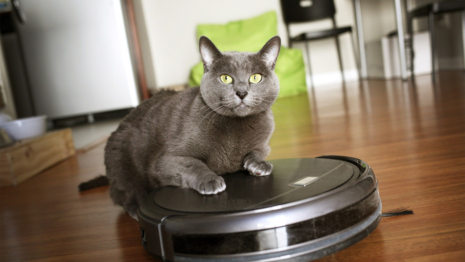 Nine Hour Video Clip of Cat Riding Vacuum Cleaner