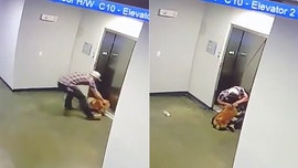 Texas man jumps to the rescue after dog gets leash stuck in elevator