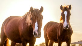 Sheriff's office warns horse owners after several animals 'harvested' for meat in Florida